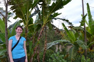 Fruit trees... including bananas!