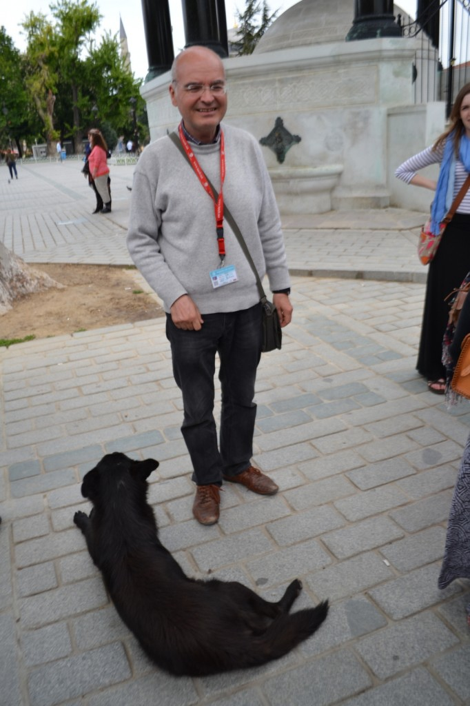 This dog joined our tour group as we strolled from the Hagia Sophia to the Blue Mosque (a treasure trove of mosaics).